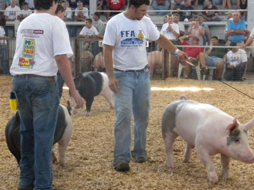 Pk at fair 14