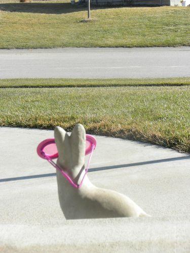 Sunny pink 1